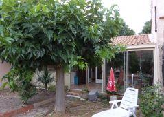 A vendre Lezignan Corbieres 110211748 Caroline bleuze immobilier
