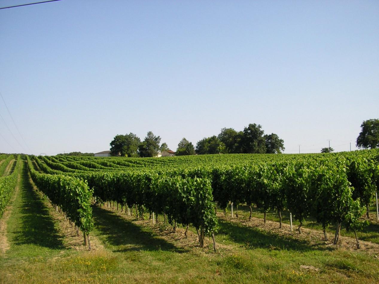A vendre Bordeaux 1200931790 Hamilton