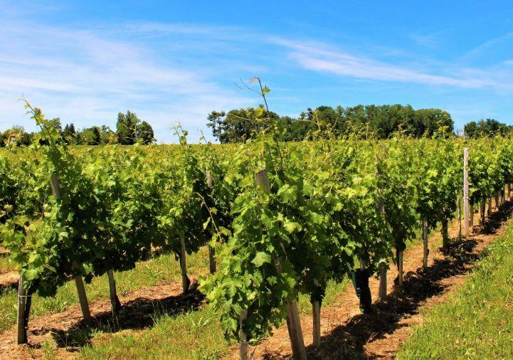 A vendre Bordeaux 1200931845 Selection habitat