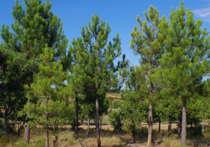 A vendre Fourques 1201217151 Selection habitat