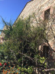 A vendre Perpignan 13007822 Saint joseph immobilier