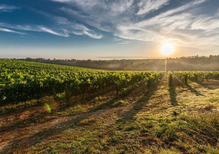 A vendre Propri�t� viticole Lourinh�   R�f 2500669 - Convergences consulting