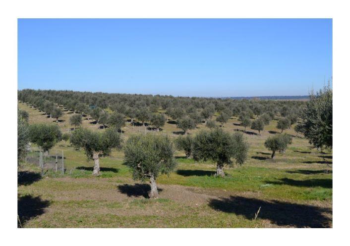 A vendre Propri�t� agricole Ribeira De Nisa | R�f 2500684 - Convergences consulting