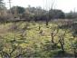 A vendre Saint Ambroix  30007608 Agence vigne