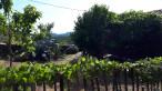 A vendre Malbosc 300081338 Agence vigne