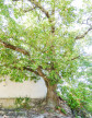 A vendre  Saint Ambroix   Réf 3014734769 - Botella et fils immobilier