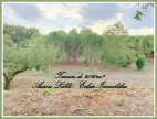 A vendre  Saint Rustice | Réf 310613644 - Eclair immobilier