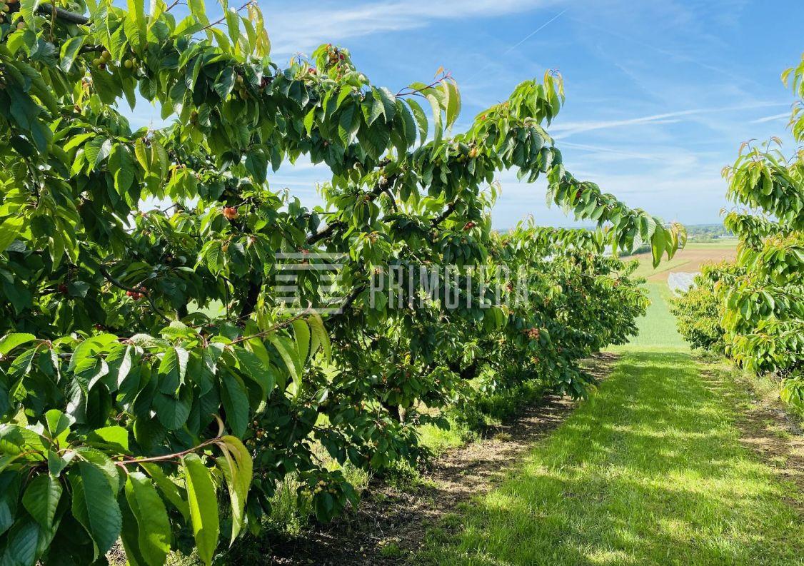 A vendre Terrain agricole Montauban | Réf 31222111 - Primotera