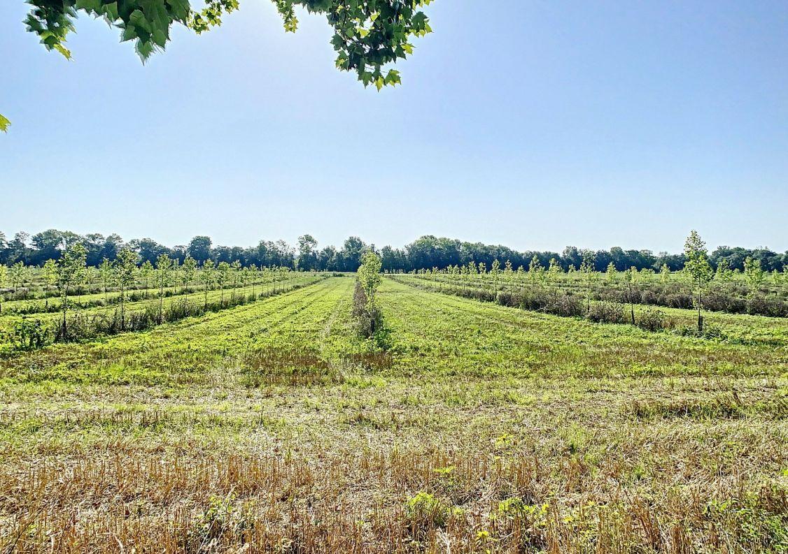 A vendre Terrain agricole L'isle-jourdain   Réf 31222136 - Primotera