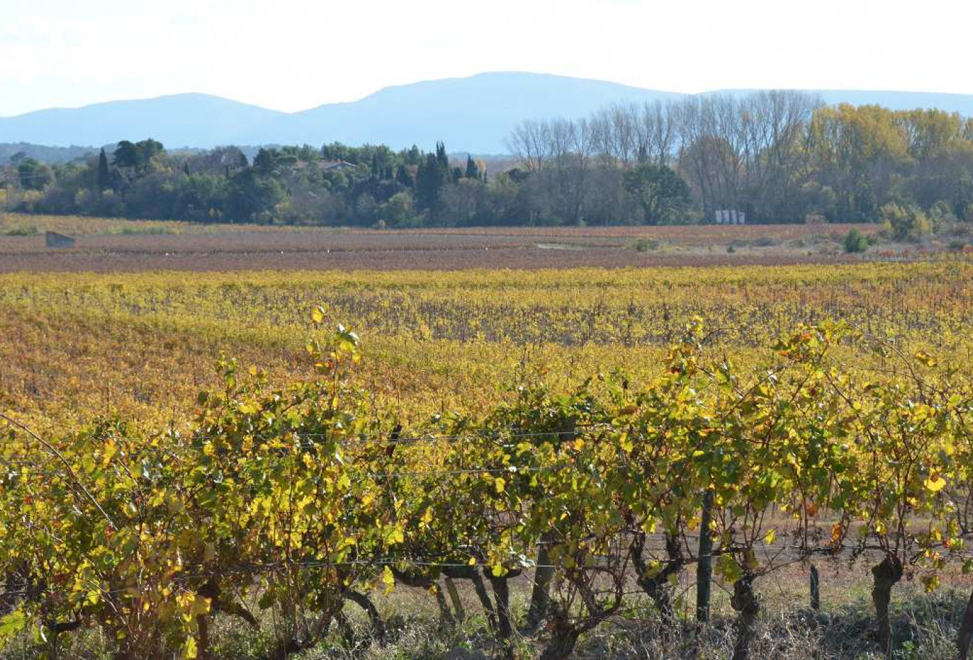 A vendre Carcassonne 340133914 Agence galerie casanova