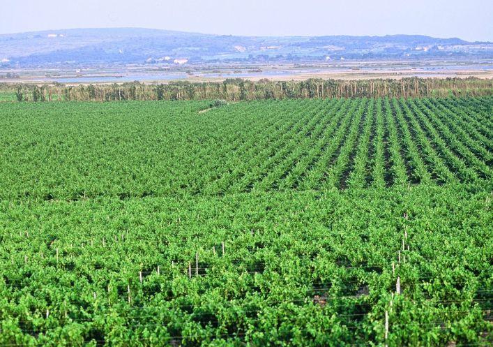 For sale Propri�t� viticole Beziers | R�f 340138544 - Agence galerie casanova