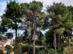 A vendre Montpellier 340147616 Agence galerie casanova