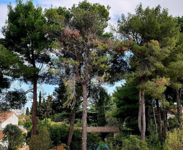 For sale Montpellier  340147616 Agence galerie casanova