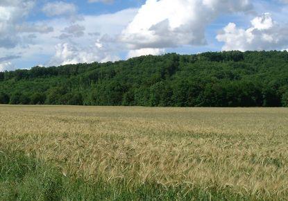A vendre Terrain agricole Mazerolles | Réf 3407076988 - Abessan immobilier