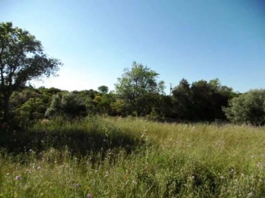 For sale  Laurens | Réf 340762503 - Objectif terrain