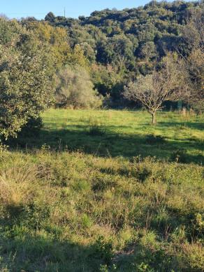 A vendre  Laurens   Réf 340762777 - Objectif terrain