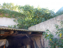 A vendre Saint Thibery 3415530932 S'antoni immobilier jmg