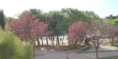 A vendre  Balaruc Les Bains   Réf 341751379 - Adaptimmobilier.com
