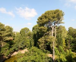 A vendre Montpellier  341923762 Majord'home immobilier