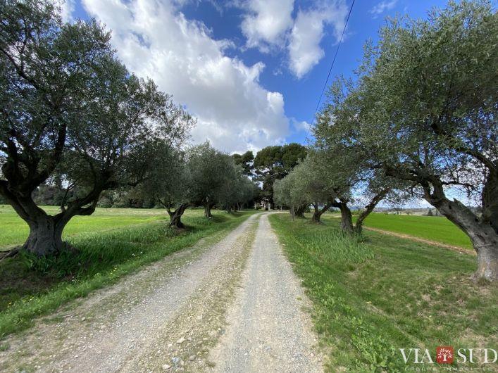 A vendre Domaine Narbonne | R�f 343322823 - Via sud immobilier