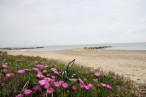 En location saisonnière Frontignan 34396245 Bord de mer immobilier