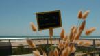 En location saisonnière Frontignan 34396251 Bord de mer immobilier