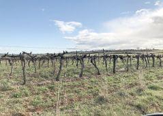 A vendre Terrain viticole Paris 5eme Arrondissement | Réf 344241767 - Agence guy