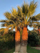 A vendre Marseillan 345009 Les clés du soleil