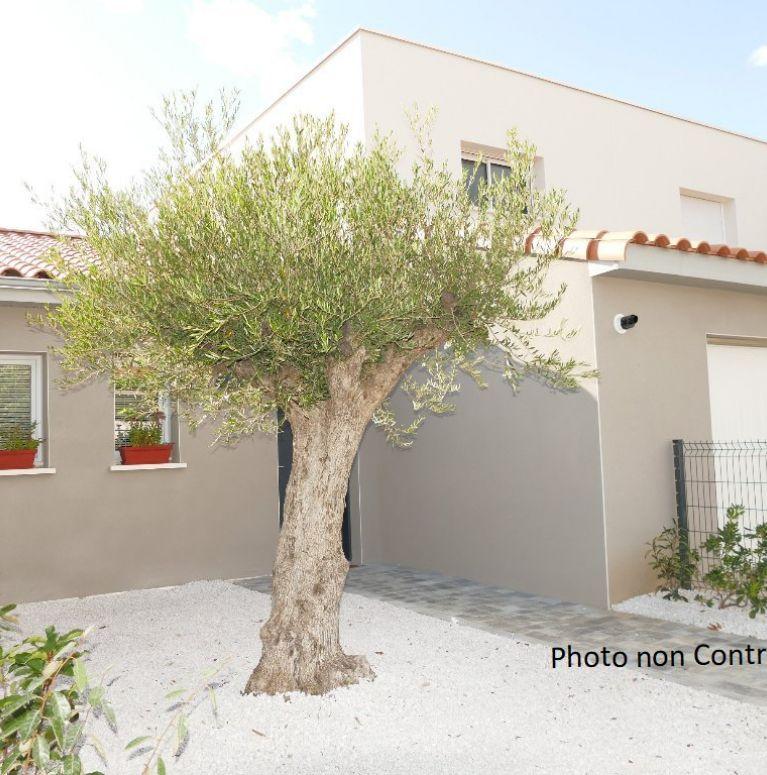 A vendre Saint Gely Du Fesc  34505396 Pierre blanche immobilier