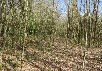 A vendre Plesse 440083540 Reseau blain habitat