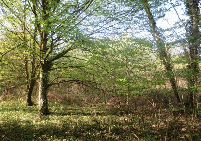 A vendre Savenay 440088298 Reseau blain habitat