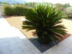 A vendre Argeles Sur Mer 66007206 Odv - office des vacances