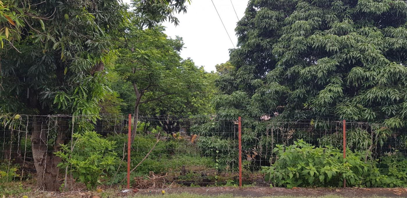 A vendre Bois De Nefles Saint Paul 690042796 Casarèse