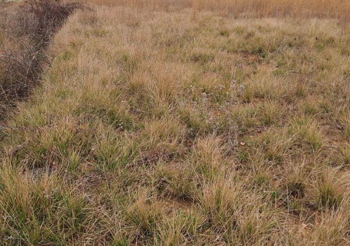 A vendre Terrain agricole Marseillan | Réf 690044438 - Casarèse