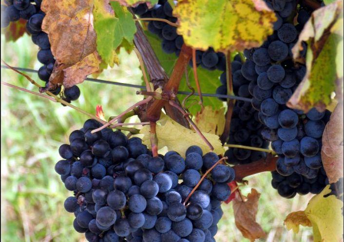 A vendre Bordeaux 7501166978 Sextant france