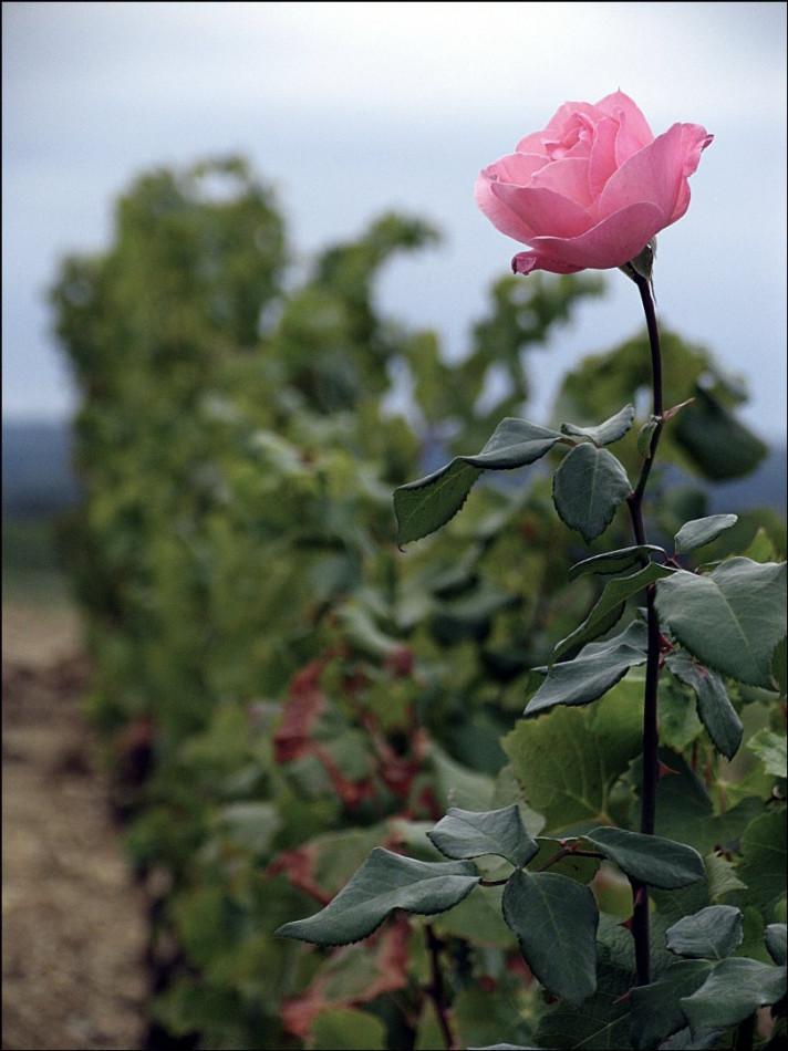 A vendre Bordeaux 7501167464 Sextant france