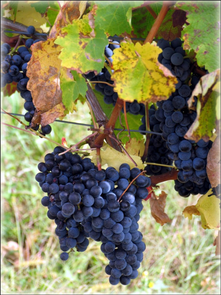 A vendre Bordeaux 7501167465 Sextant france