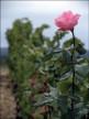 A vendre Bordeaux 7501169050 Sextant france