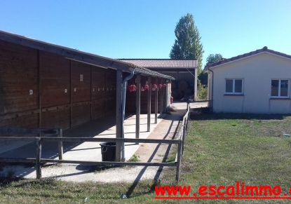 A vendre Castelsarrasin 820034534 Escal'immo