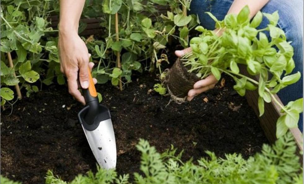Conseils pour jardiner sans engrais ni pesticides Abessan immobilier