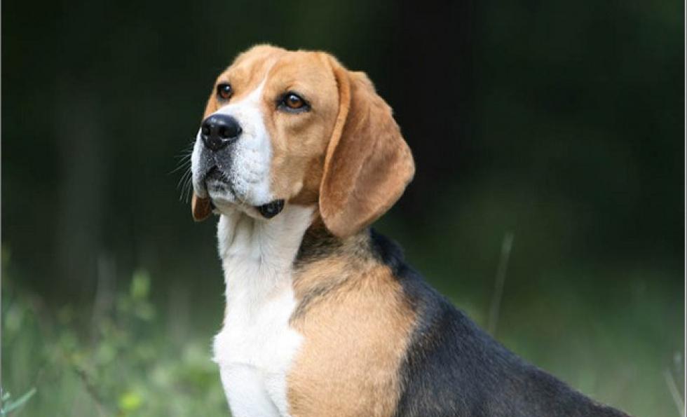 Nuisances sonores et aboiement d'un chien : que dit la loi. Abessan immobilier
