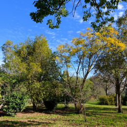Modification du jardin botanique de saint-esteve Premium immobilier